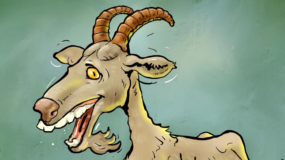 Chèvre à trous